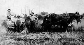 PO-766-41- Havesting wheat- Likely Meadowbrook Farm with Swing Rock- c 1914-1915